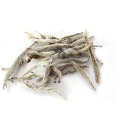 Organic Silver Needle