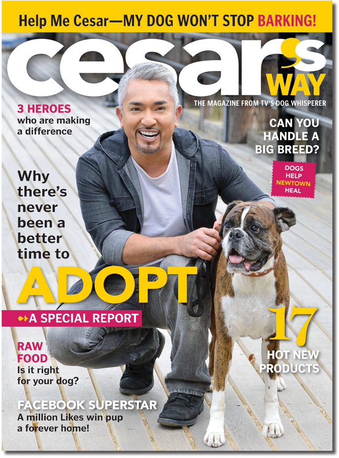 Cesar Milan - Tea for Dogs